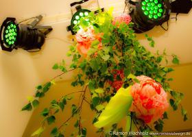 4fiesta-de-mayo2019 Foto Ramon-Wachholz IMG 4088