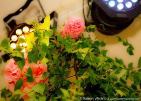 6fiesta-de-mayo2019 Foto Ramon-Wachholz IMG 4089